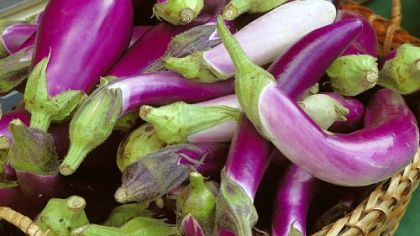 Eggplants come in a variety of shapes.