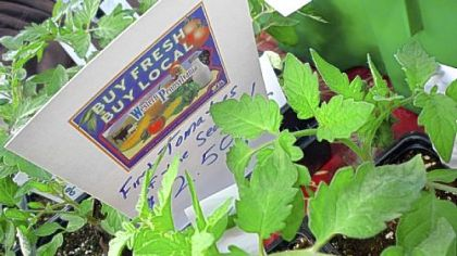 """The first tomato plants of the season"" for sale at the Dillner Family Farm booth at the Farm to Table show."