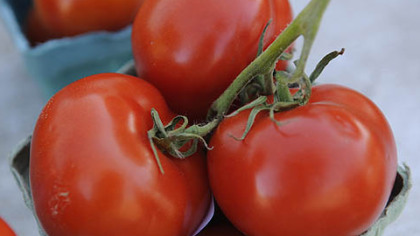 Tomatoes from Harvest Valley Farms in Valencia.
