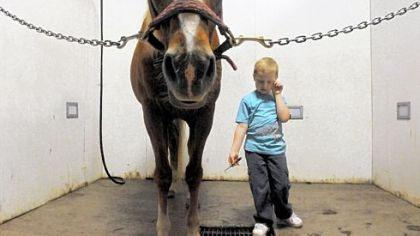 Timmy Langer, 6, of Irwin, pauses before cleaning the hooves of Buddy at Nickers 'n Neighs, a therapeutic riding center in Westmoreland County. Timmy, who has autism, learns to ride and take care of horses at the center, a nonprofit that uses horses to promote cognitive, social and emotional well-being for people who have disabilities.