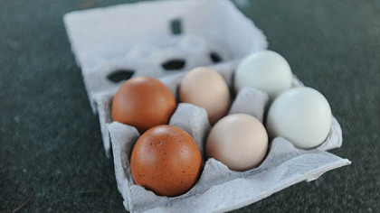Eggs from Nancy Chubb's flock. From left: Black Copper Maran eggs, Faverolles eggs and Easter Egger eggs