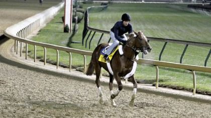 Exercise rider Carlos Correa gallops Breeders' Cup Classic hopeful Ice Box under the lights at Churchill Downs Wednesday. The Classic goes to post at 7 p.m. Saturday.