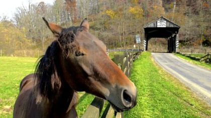 A horse grazes in the pasture next to the Woods Covered Bridge in Greene County.